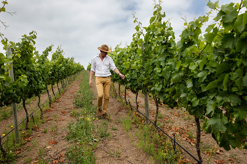 Proprietor Anthony Hamilton Russell in one of the young Chardonnay vineyards on Hamilton Russell Vineyards