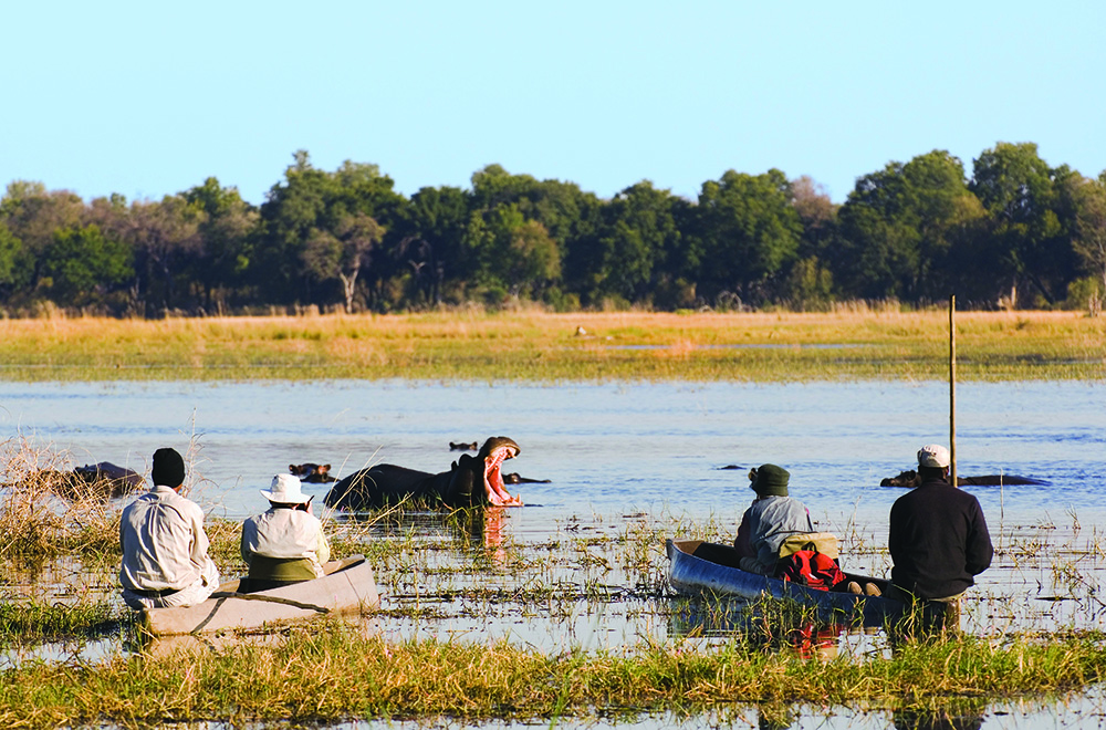 If you're lucky a mokoro canoe will bring you eye-to-eye with hippos