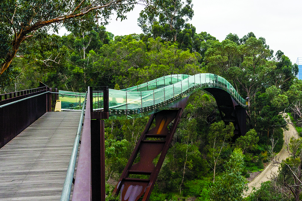 Foot bridge running through the treetops in Kings Park, Perth, Australia.