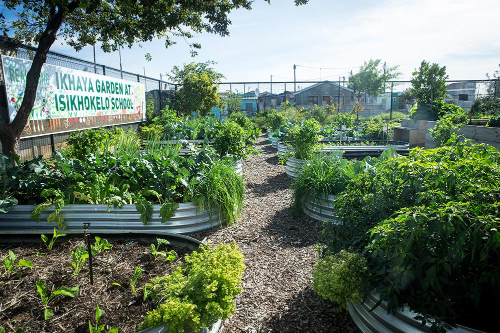 Ikhaya's lush food garden